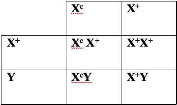 color blindness punnett square x linked inheritance genetics generation