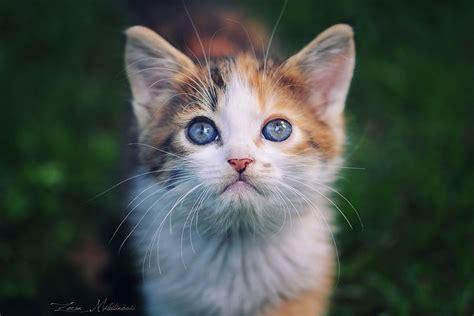 Imagenes Increibles De Gatos | 21 consejos para hacer incre 237 bles fotos de gatos foto24