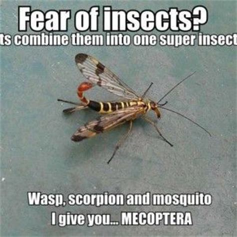 things bed bugs hate 17 images about insect quotes on pinterest ants a rat