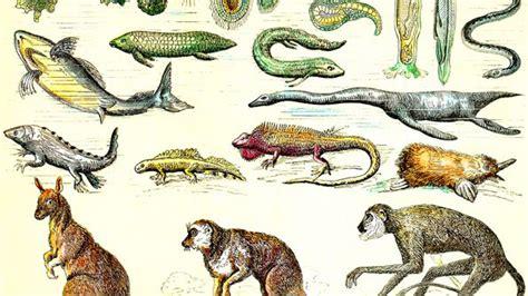 the origin of species the economist