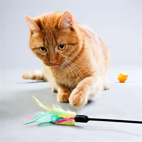 who plays cat 5 reasons you should play with your cat every day catster