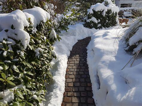 Garten Pflanzen Winter by Garten Im Winter 187 Pflanzen Sch 252 Tzen Und B 228 Ume Schneiden