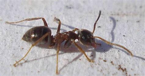Hausmittel Gegen Ameisen Auf Der Terrasse 4450 by Die Besten 20 Ameisen Ideen Auf Ameise
