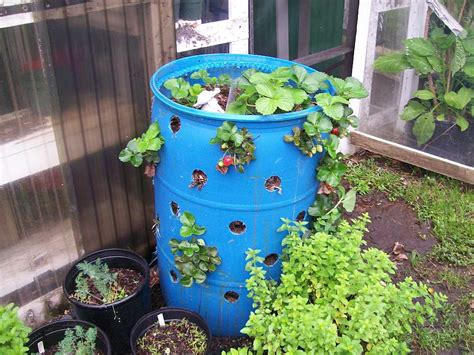 Strawberry Barrel Planter by The Citrus May 2013