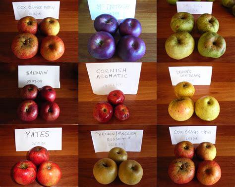 apple varieties hard cider apples elspeth payne on