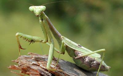 cadena trofica hormigas insectos beneficiosos para el huerto