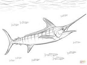realistic atlantic blue marlin coloring page free