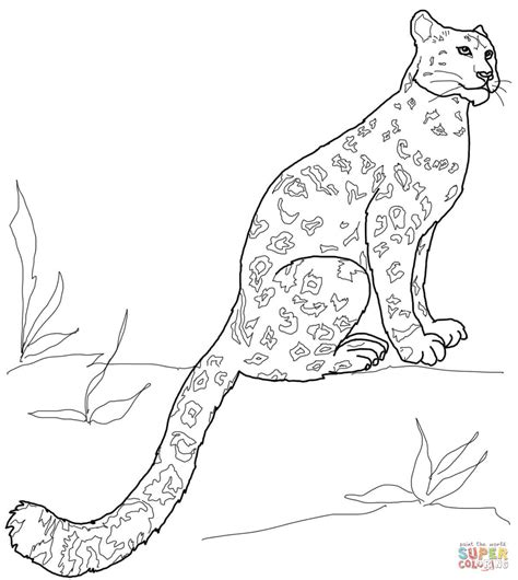 snow leopard sitting coloring page free printable
