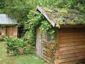 small green roofs ancaya garden shed