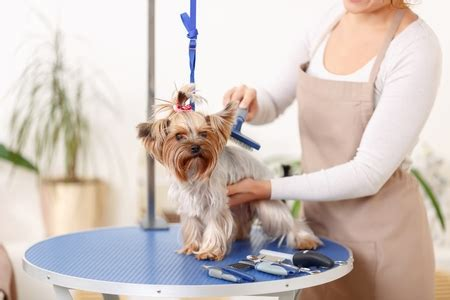 grooming tables for small dogs 11 best foldable grooming tables for small and large