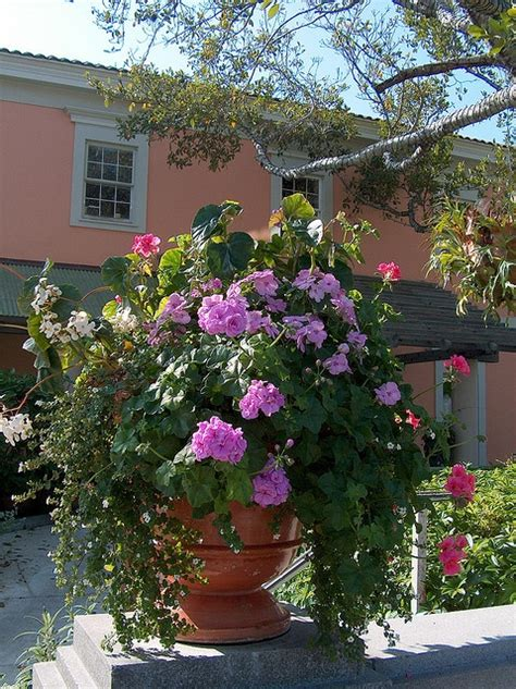 container gardens for florida 25 best images about florida garden on wedding