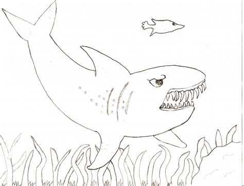 tiger shark coloring page free coloring pages of tiger shark