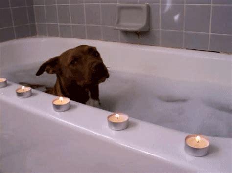 bathtub dog bubble bath adorable gif wifflegif