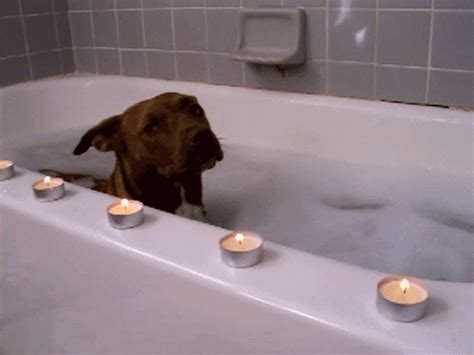 doing in bathroom bubble bath adorable gif wifflegif