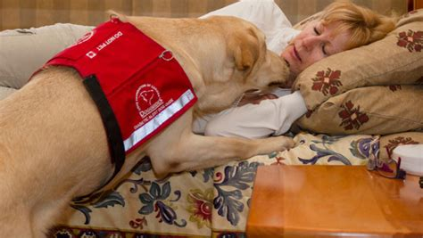 diabetes service dogs sniffing out hypos insulin nation