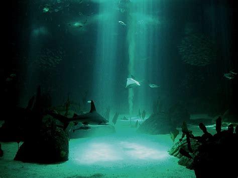 underwater hd wallpaper 1920x1080 underwater backgrounds wallpapersafari