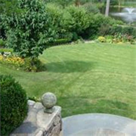 tipi di erba da giardino prato giardino prato come curare il prato