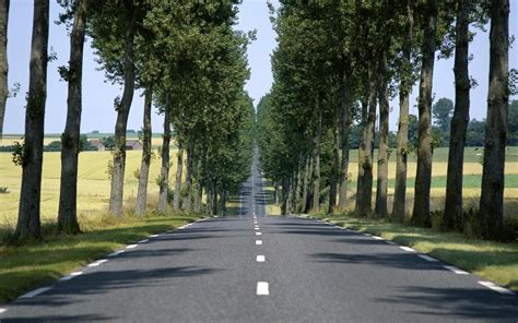 wallpaper trees empty summer road trail alley desktop