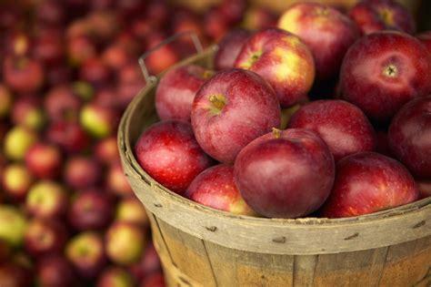 fruit by season guide to maryland seasonal fruits vegetables