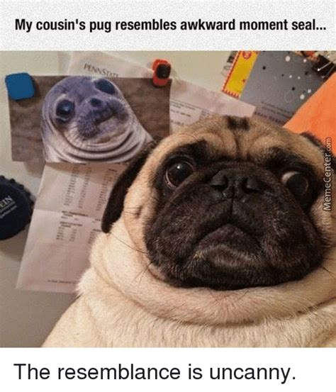 pug diabetes 25 best memes about awkward moment seal awkward moment
