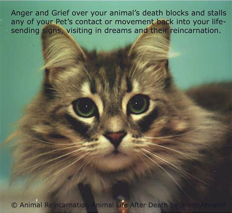 pet cat pet loss quotes cats quotesgram