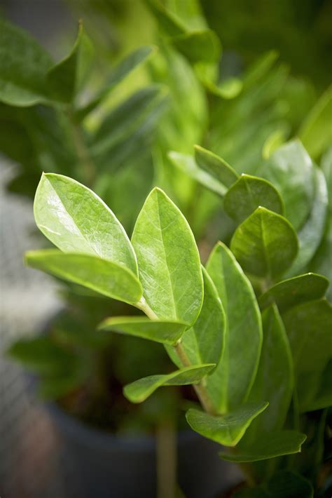 house plants that require little light water ehow uk houseplants that don t need much water hard to kill