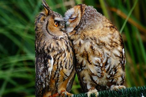 owl lovers 50 cutest animal couples showing us what true love is
