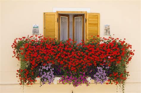 fiori per balconi fiori da balcone estivi con fiori colorati soluzioni per