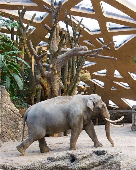 designboom elephant markus schietsch architekten caps elephant sanctuary with