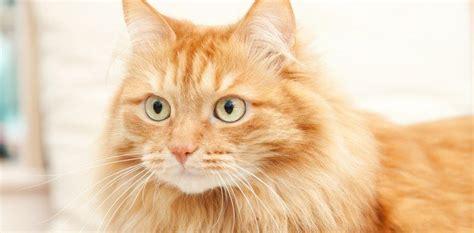 lettiere gatto per il gatto la lettiera giusta cose di casa