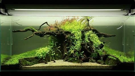 Perlengkapan Aquascape Less Moss Adhesive ghosts