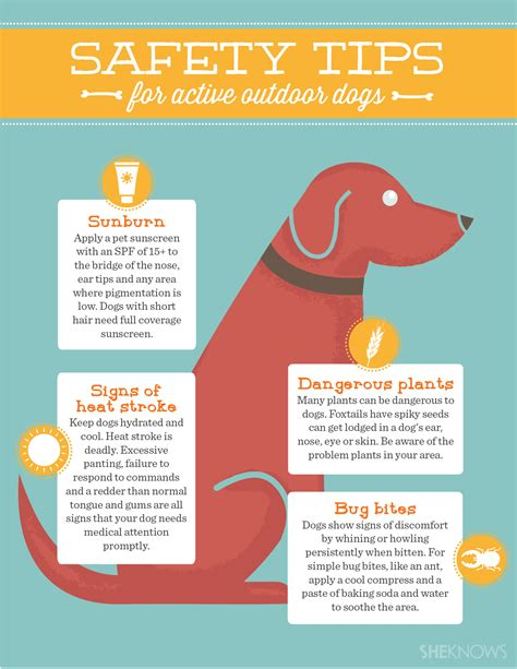 9 Tips On Keeping Your Outside Pet Safe From The Cold by 5 Tips To Keep Your Active Outdoor Safe This Summer