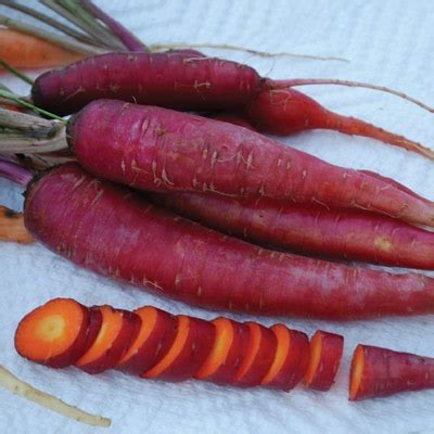 coding for carrots solutions carrot seeds and plants vegetable gardening at