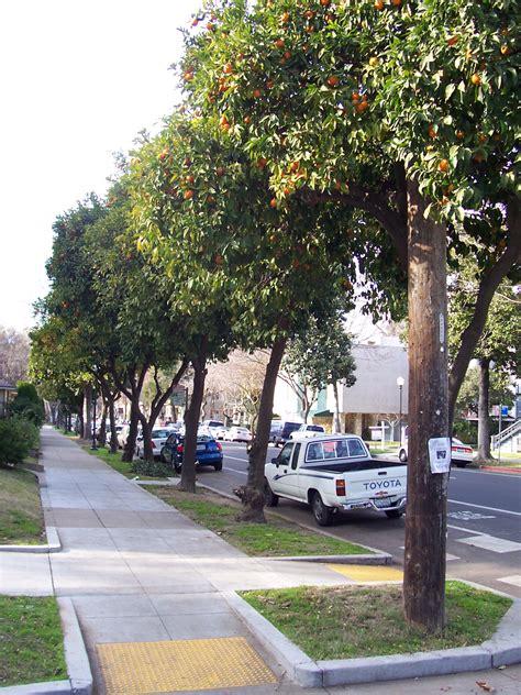 city tree local ecologist tree walk the fruits of city trees