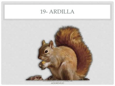imagenes de animales que empiezen con la letra d animales con la letra a