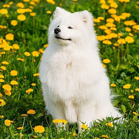 cute dog names    ideas   puppy sliceca