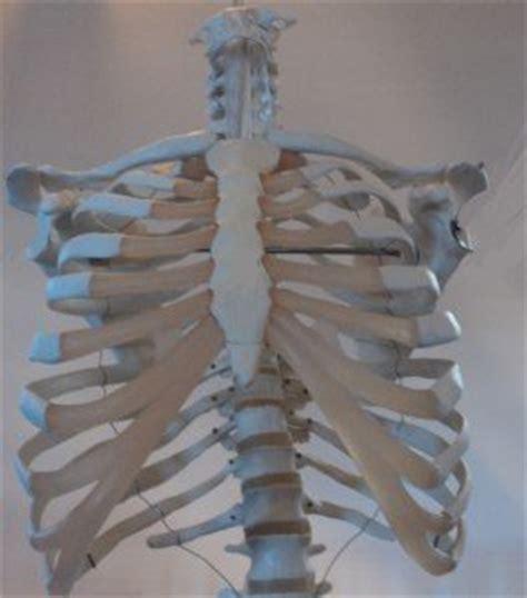 dolore gabbia toracica frattura delle costole guarigione come dormire cosa