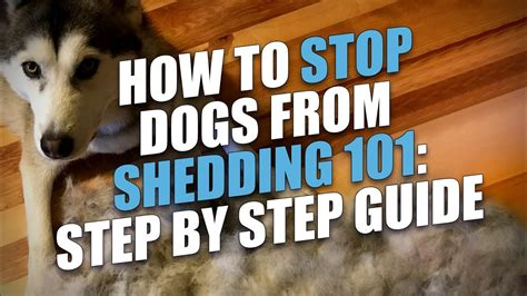 how to stop shedding how to stop dogs from shedding step by step guide bravecto flea