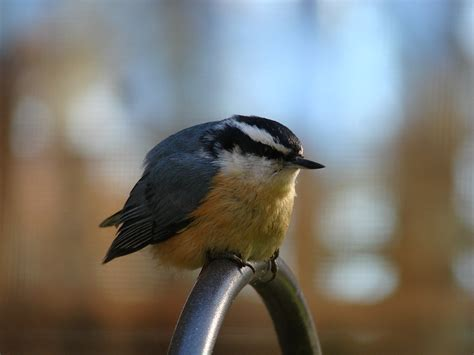 wild birds unlimited where to put suet feeder