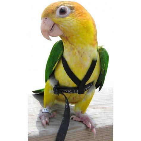 Ucan Hoddie harnais perroquet aviator x small 32 90