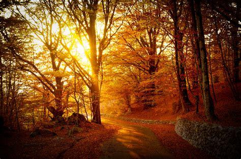 warm autumn light through golden trees by wildfox76 on