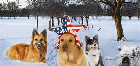 most popular breed in usa most popular breeds in america official ranking