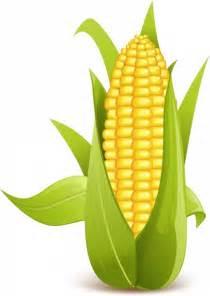 Corn Husk Flowers Corn Free Vector In Adobe Illustrator Ai Ai