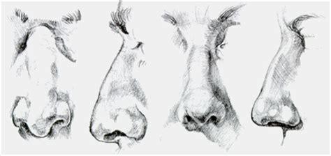 imagenes de narises a lapiz profesores de artes visuales agosto 2012