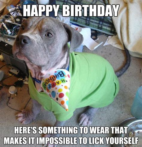 Birthday Dog Meme - funny happy birthday meme animal www imgkid com the