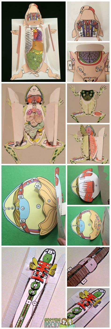earthworm paper dissection 50 best images about human anatomy physiology on