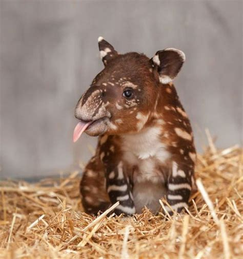 most adorable animals the most adorable baby animals of all time barnorama
