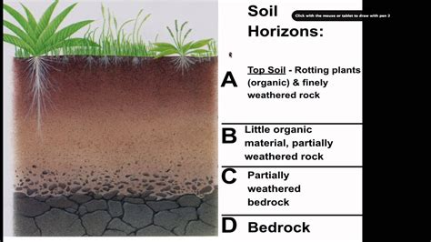 Soil Development Diagram soil formation