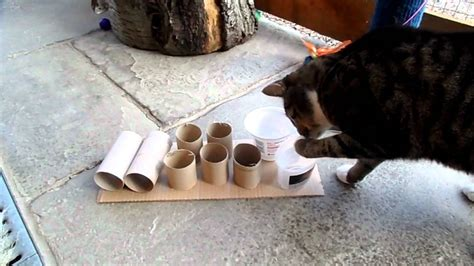 Cat Food Puzzle Feeder taking toilet paper rolls to a new level 4 food puzzles