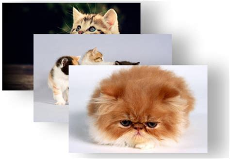 cute kitten themes for windows 7 beautiful kittens theme for windows 8 8 1